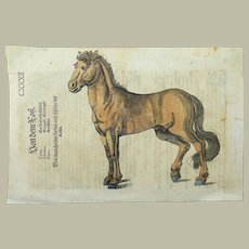 Conrad Gesner 1516-1565 - Horse - hand coloured woodcut from folio First Edition 1563