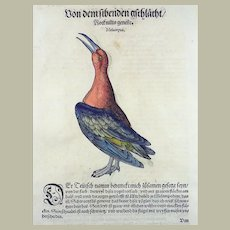 Conrad Gesner (1516-1565) - Waterbirds - 2 hand coloured woodcuts - From First Folio Edition - 1557