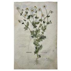 Leonhart Fuchs - Camomile / Solomon Seal 2 folio woodcuts - 1st Edn 34 x 22 cm - 1543