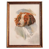 Springer Spaniel Dog Portrait, Oil on Canvas