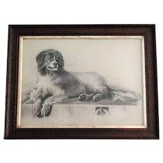 Antique Newfoundland Dog Charcoal Sketch, after Edwin Landseer