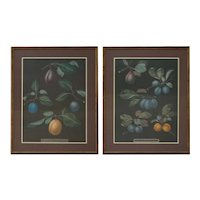 Framed Vintage Large Botanical Fruit Prints, Pair
