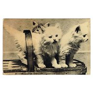 Vintage Postcard Three Kittens In Basket Squeaker Card Black and White Photo Card