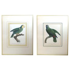 Pair of François Levaillant Hand-Colored Engravings Tropical Birds