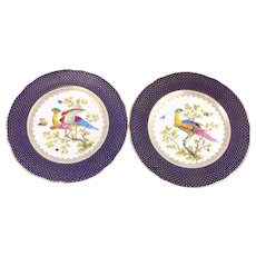 Antique Pair of Cauldon Hand-Painted Colorful Wild Birds Plates 8 5/8""