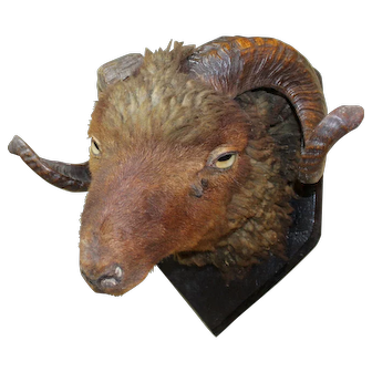 Mounted Antique Ram's Head Taxidermy