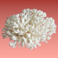 Natural White Stem Coral Specimen Aquarium DIY Art