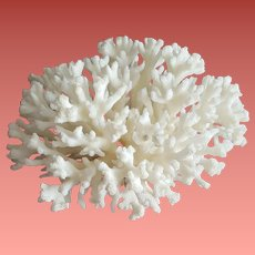 Natural White Stem Coral Specimen Aquarium DIY Art