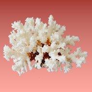 Natural Red Stem White Coral Large Specimen Aquarium DIY Art