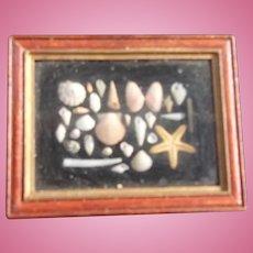 Beautiful Artist made Diorama of Tiny Florida Shells