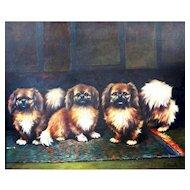 1950 Pekingese Dogs Oil Painting.