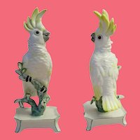 "Nymphenburg Porcelain ""Yellow"" Cockatoo ~ Signed Nymphenburg Trademark in Green and Impressed w Crest  # 677"