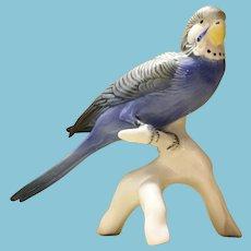 """Antique Karl Ens 7"""" Blue Parakeet Bird Porcelain Budgerigar Germany"""