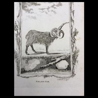 Goat Engraving