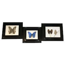 A Collection Of Three Victorian Taxidermy Butterflies.