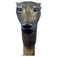 Late Victorian  Birch Greyhound Walking Stick