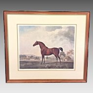 "George Stubbs ""Sweet William"" Hand Colored Etching Framed & Matted  Originally Published 1796"