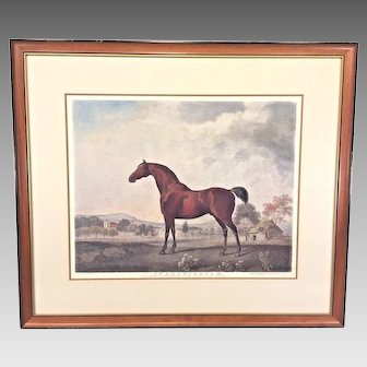 """George Stubbs """"Sweet William"""" Hand Colored Etching Framed & Matted  Originally Published 1796"""