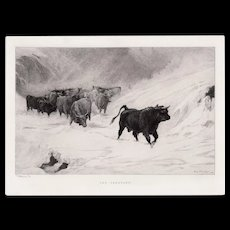 """LISTED ARTIST John A. MacWhirter (Scottish, 1837-1911) """"The Vanguard"""" Plate Signed — Western Cattle Etching"""