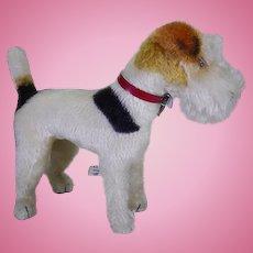 Steiff Foxy terrier circa 1950's