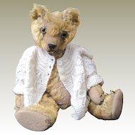 English bear by W J Terry