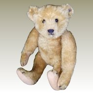 Early Steiff bear with ID superb condition