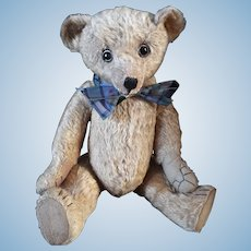 W J Terry Teddy Bear c.1915