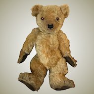1930's English Chiltern Bear 14 inches