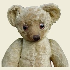 British bear c.1920's made by Terrys 21.5 inches