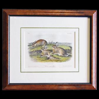"""Worm-wood Hare"" Audubon, Hitchcock stone engraving."