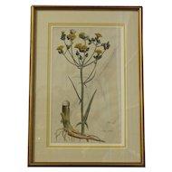 Botanical Print by Curtis