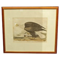 """""""The White Headed Eagle"""" by Alexander Wilson, Lithograph"""