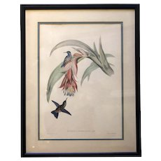 "Vintage Lithograph Study of Hummingbirds, ""Erythronota Sophiae"", Hullmandel & Walton"