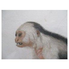 C1780 Set Of Four Jean Baptiste Audebert (1759-1800) Monkey / Ape Hand Coloured Engravings