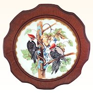Framed Hand Painted Bird Plate - Woodpeckers