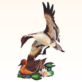 Vintage Hutschenreuther Limited Edition of Ducks