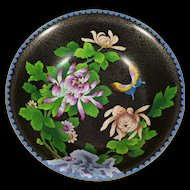 Large Vintage Chinese Cloisonne Bowl, Black With Chrysanthemums
