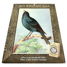 Arm & Hammer Baking Soda Store Counter Advertising Display - Indigo Bunting c.1915