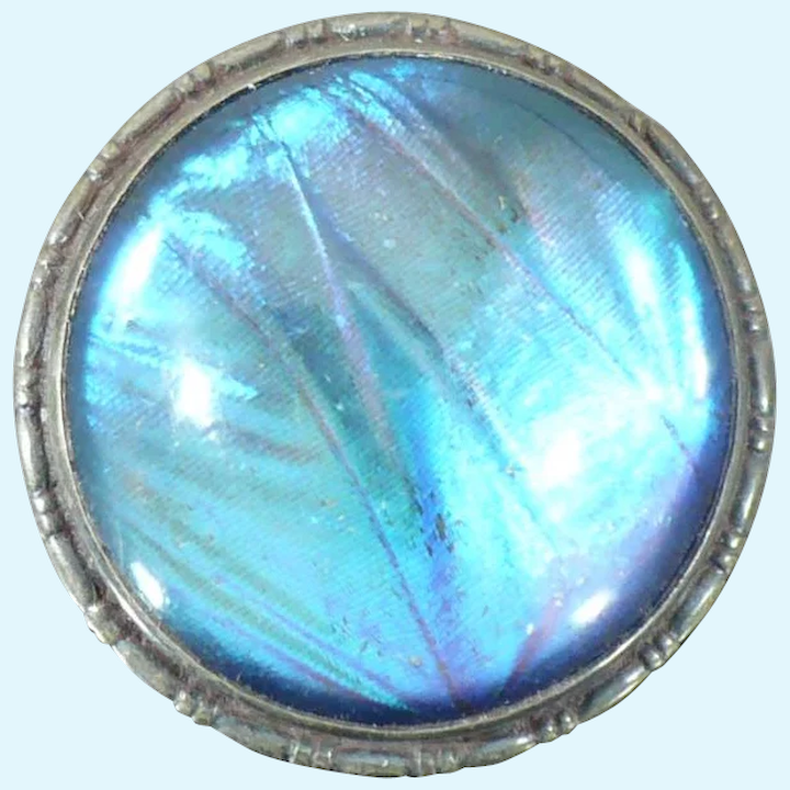 Antique England Morpho Butterfly Wing Sulfide Nymph Sterling Silver Brooch