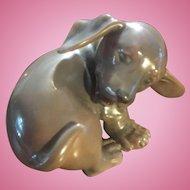 Royal Copenhagen Dachshund puppy chasing his tail