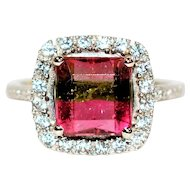 WOW Factor 3.37tcw Untreated Watermelon Tourmaline & Sapphire 10kt White Gold Ring