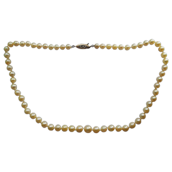 A beautiful and classic single strand of Mikimoto cultured pearls with 9 karat gold clasp in original box.