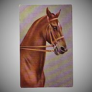 Beautiful Postcard of a Handsome Show Horse with Bridle