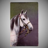 Spanish Breed Horse Postcard with Fancy Double Bridle