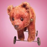 Bing Bear On Wheels