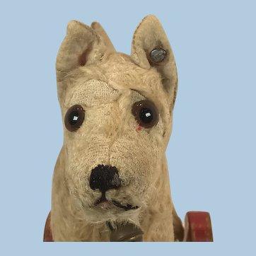 Steiff Sealyham dog on eccentric wheels 1939-1943
