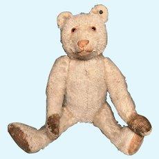 """Steiff """"Dicky Bear"""" Teddy bear 1930"""