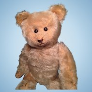 Early 13 inch American Teddy Bear