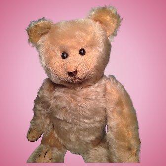 Early 13 inch American Teddy Bear