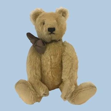 Antique Steiff Teddy Bear 16 inches tall.